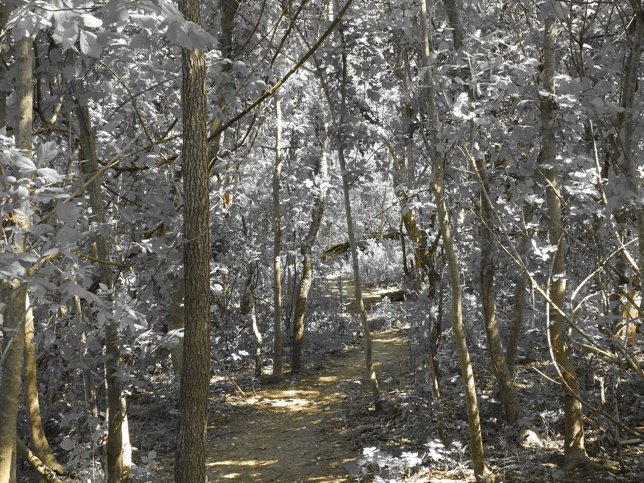 Crescent Bend Nature Park Nature Photography Selective Color Creekside Trail