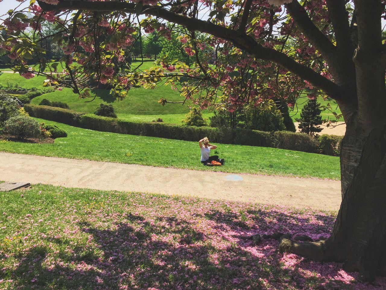 Blossom Park Mum Calverley Hidden Gems