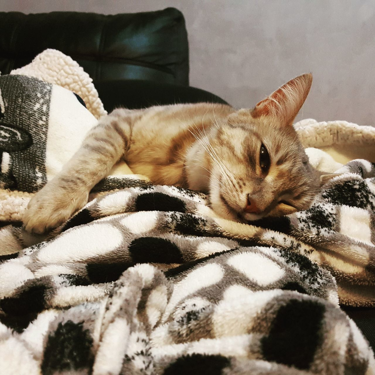 animal themes, one animal, relaxation, pets, mammal, domestic cat, domestic animals, indoors, resting, sleeping, home interior, lying down, sofa, feline, no people, comfortable, bed, close-up, day