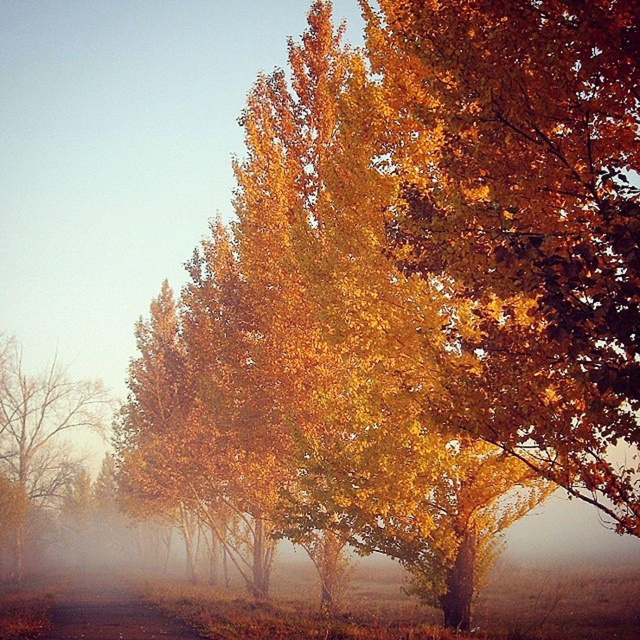 омск паркпобеды птичьягавань осень туман Fog Autumn CanonA550