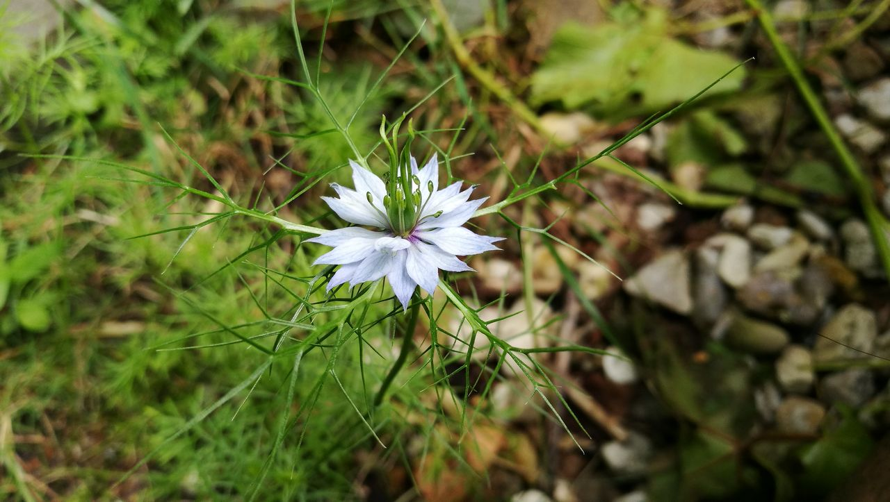 flower, growth, nature, fragility, white color, beauty in nature, plant, freshness, petal, flower head, blooming, no people, green color, spring, close-up, day, outdoors