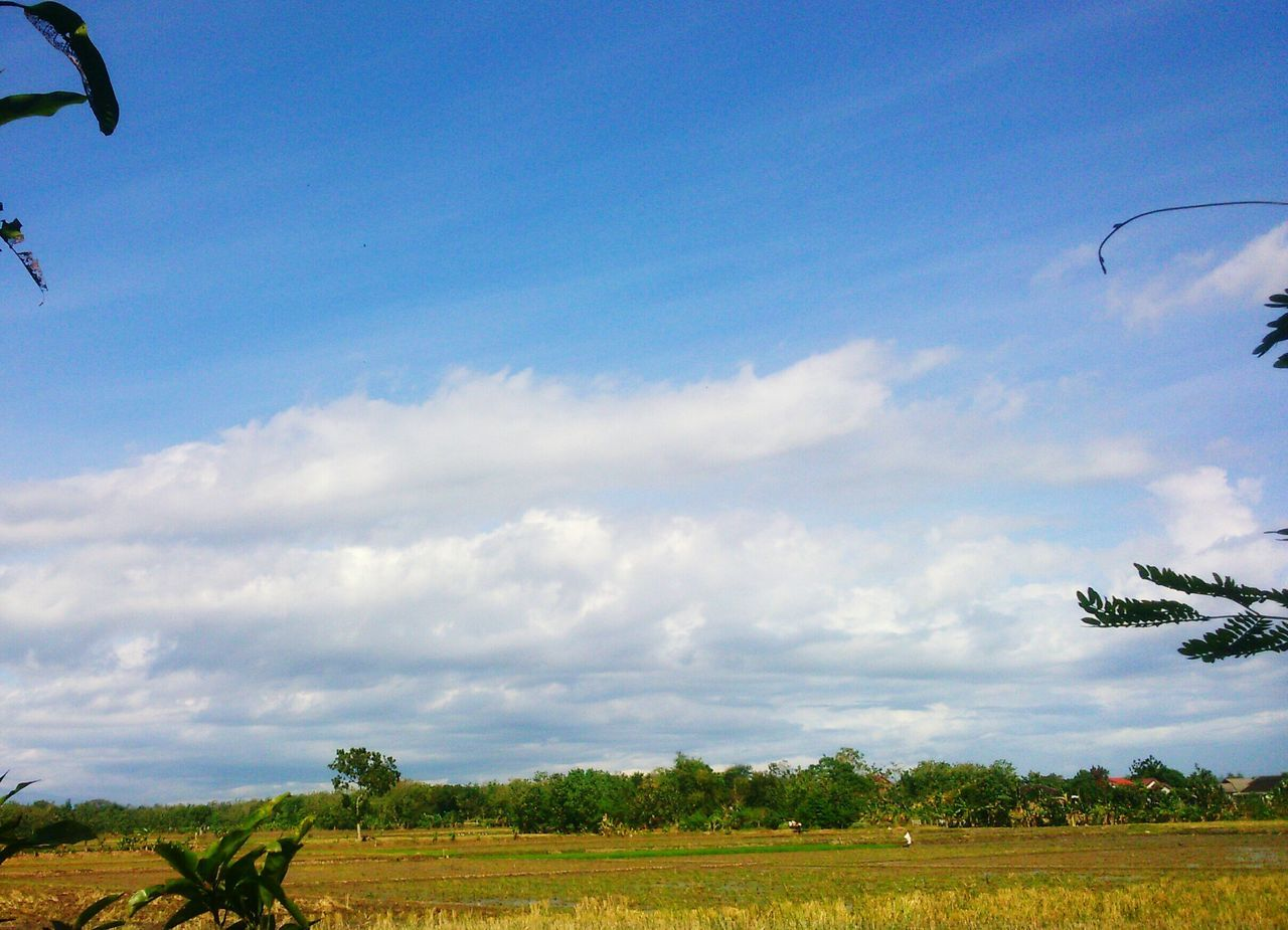sky, flying, day, nature, beauty in nature, field, tree, landscape, growth, cloud - sky, outdoors, tranquil scene, scenics, tranquility, no people, mid-air, agriculture, rural scene