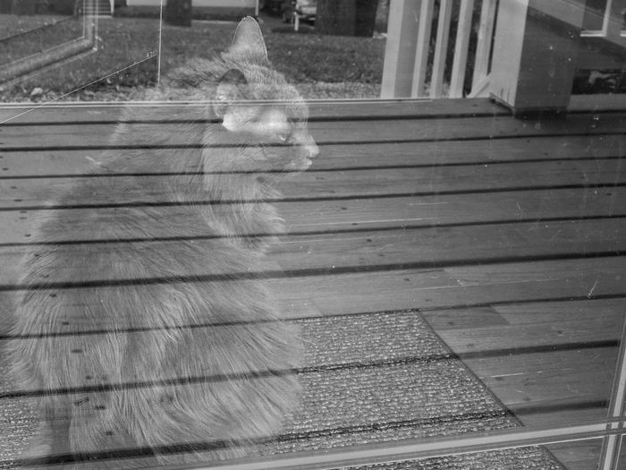 Showing Imperfection This picture came out differently than what I thought it would. I just wanted a picture of my cat but the lines of the porch were reflected onto the door and into the picture. I personaly think it looks cool. Lines LINE Cat Porch Reflection Pet Cats Pets Black & White Accident Accidental Accidental Shot Accidental Beauty