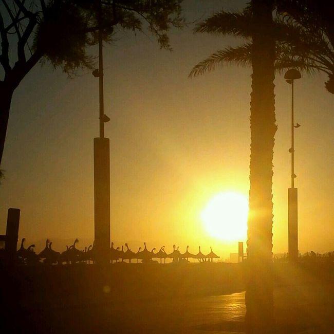 Nofilter Dömmen Palma Beach