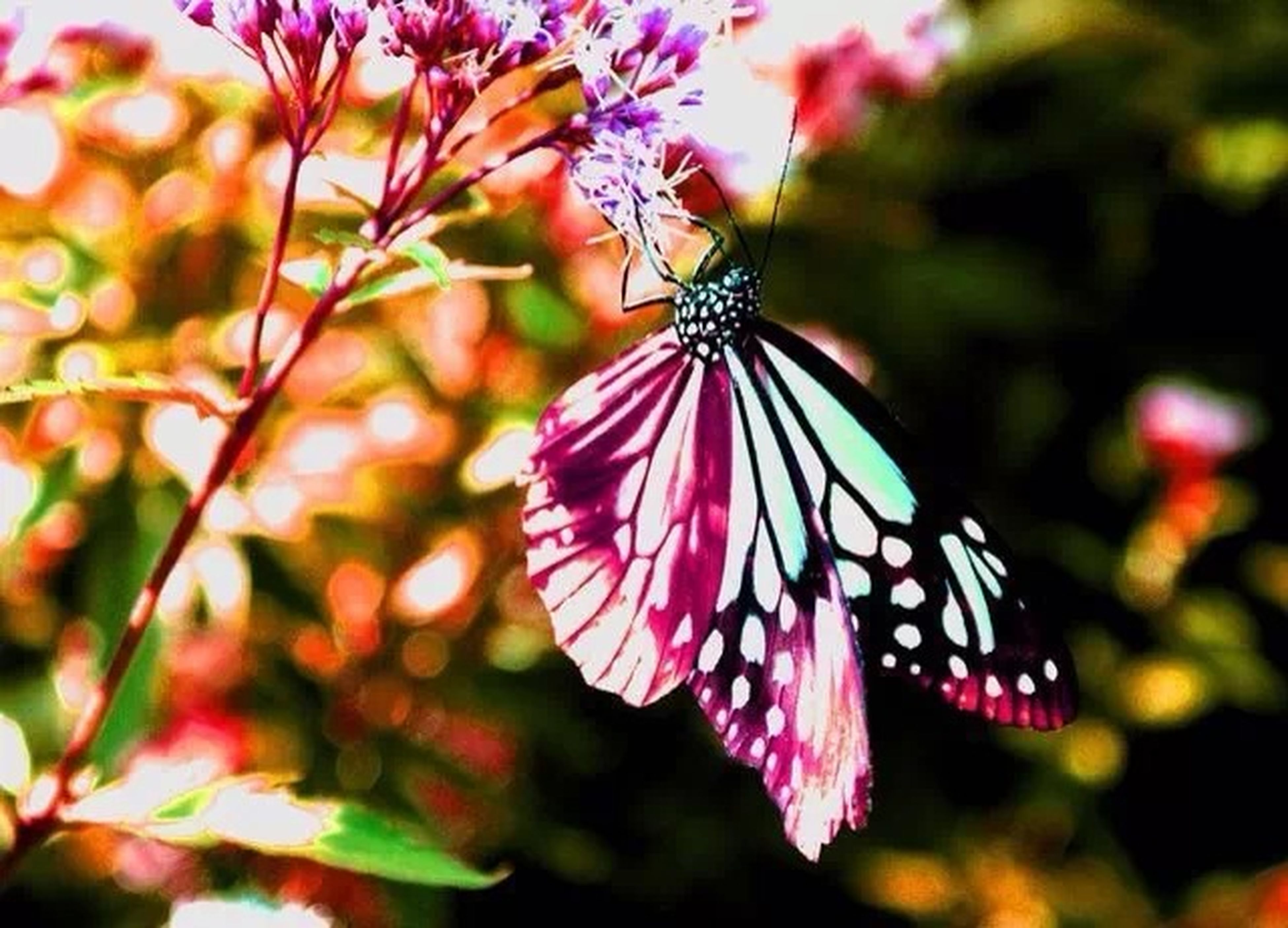 flower, one animal, insect, butterfly - insect, butterfly, animals in the wild, focus on foreground, animal themes, fragility, petal, wildlife, close-up, freshness, beauty in nature, growth, flower head, nature, pollination, pink color, plant