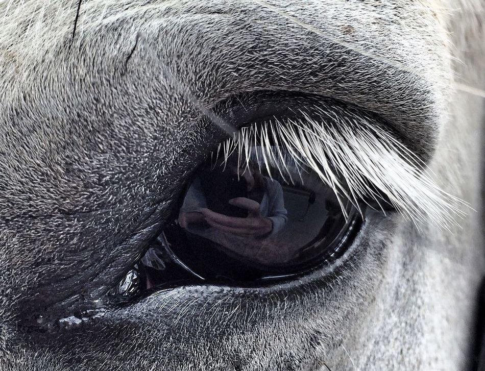 Beautiful stock photos of eyes, Animal Body Part, Animal Eye, Animal Themes, Close-Up