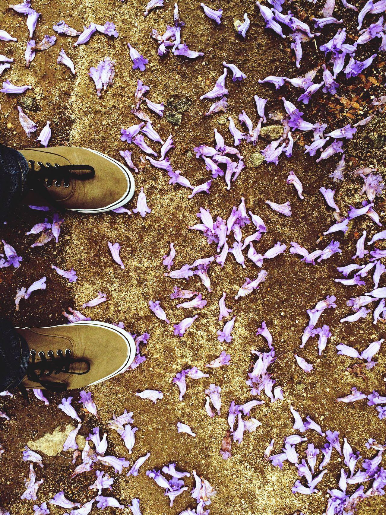 EyeEm Best Shots Eye4photography  EyeEm Gallery Fallen Manvsnature  IPhoneography Mypointofview Point Of View Ground Two Is Better Than One Eyeemphoto EyeEm EyeEm Nature Lover EyeEmBestPics Eyem Gallery