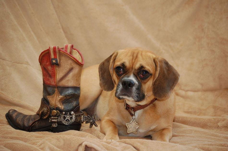 Beautiful stock photos of cowboy, Animal Themes, Boot, Cowboy, Cowboy Boot