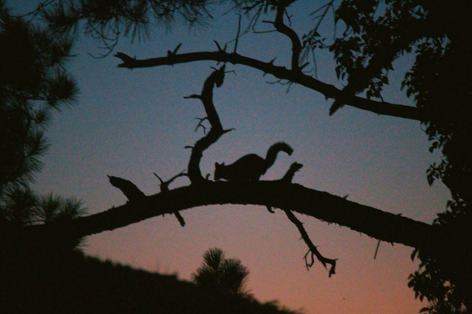 From the veranda. Silhouette Tree Branch No People Animal Themes Animal Wildlife Sunset Outdoors Nature Sky Australia Australian Wildlife Warburton Yarra Valley First Eyeem Photo