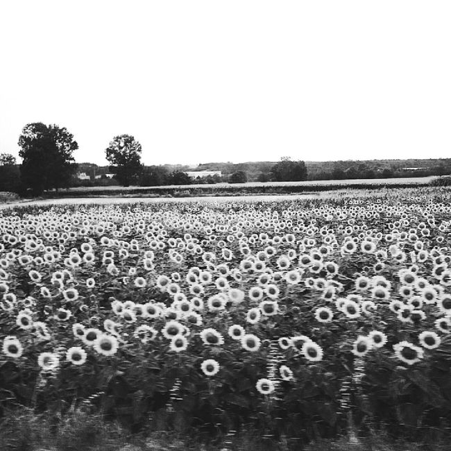 What I Value the time I spend in my car with my dad is priceless. I can think about anything and suddently my thoughts get coloured and the world around me gets black and white Nice View Sunflowers Black And White On The Road In Motion Life Goes By With My Dad Thoughts Reflections