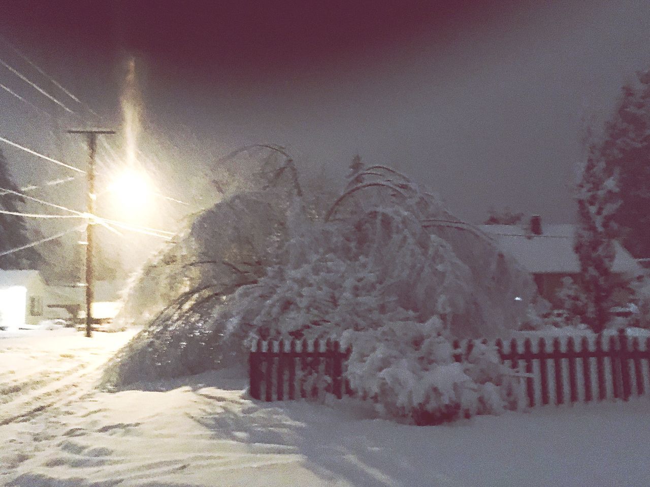 Snow Winter Cold Temperature Weather Tree Outdoors No People Snowing Nature Day