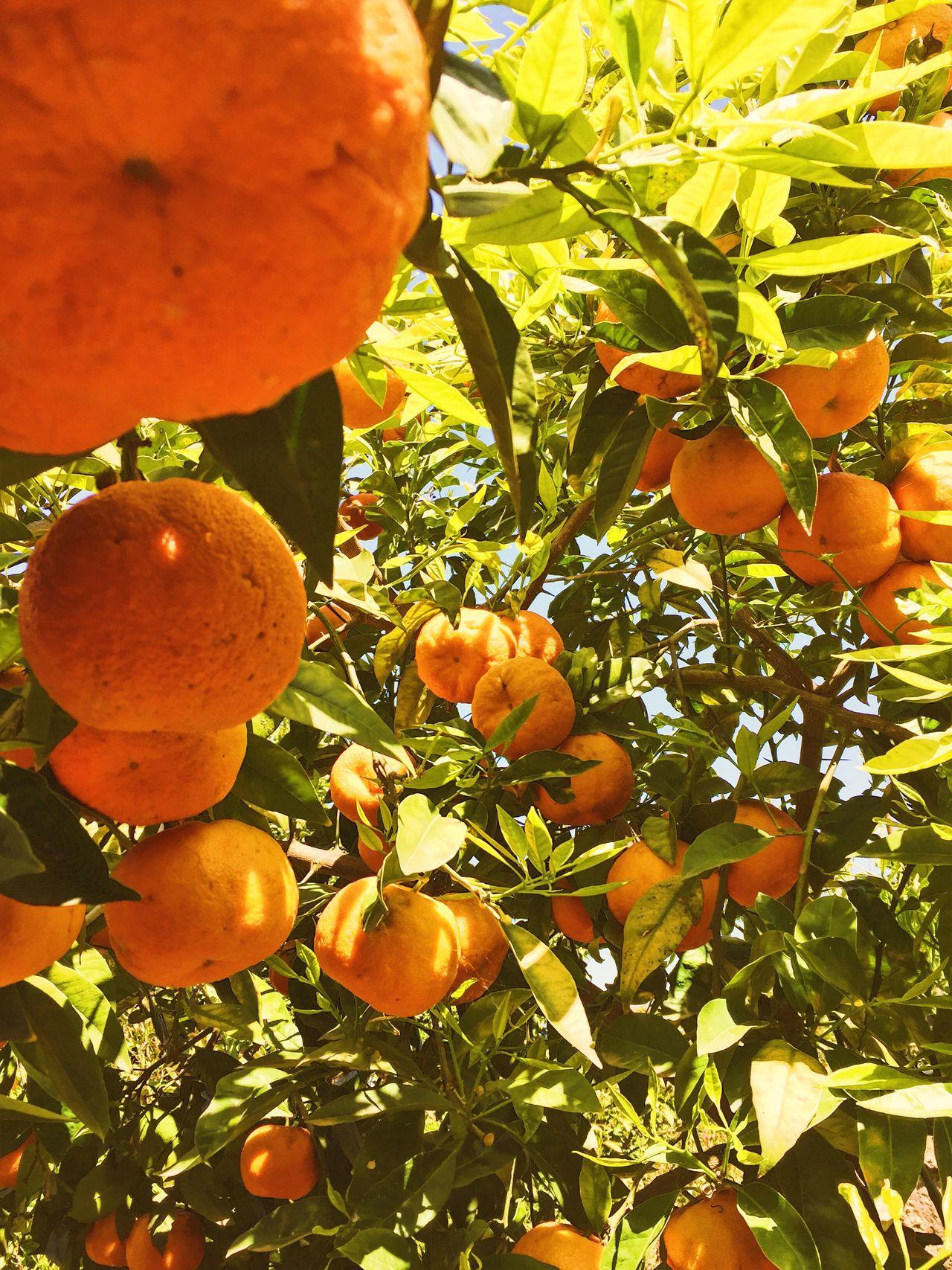 Amalfi Coast Amalfi  Orangetree Smellslikespringspirit