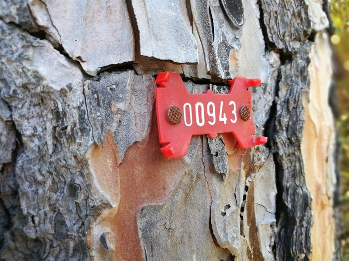 Text Western Script Communication Capital Letter Day Textured  Close-up Red Outdoors No People Tree Trunk Built Structure No Filter, No Edit, Just Photography Color Photography Etichettatura Alberi