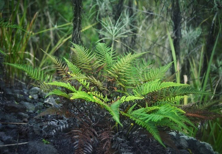 Nature Growth Green Color Plant Beauty In Nature Close-up Day Leaf No People Outdoors Freshness Backgrounds Frond Forest Tree Wild Nature Adventure Misty Mountains  Misty Morning Plant Mountain Track