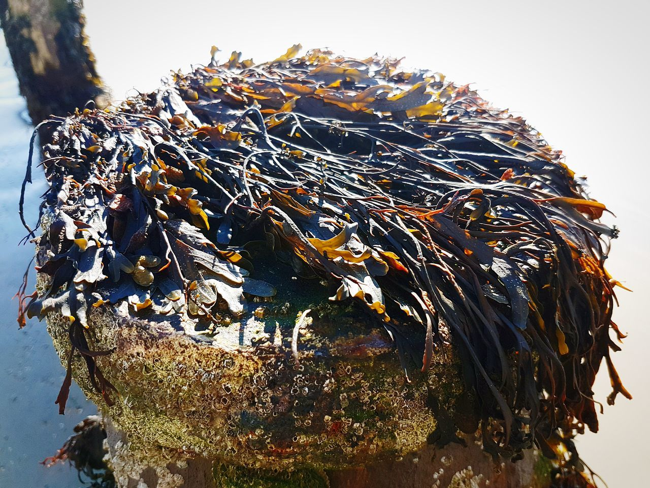 Close-up Nature Outdoors Day Beauty In Nature Freshness Beach Seaweed Kelp