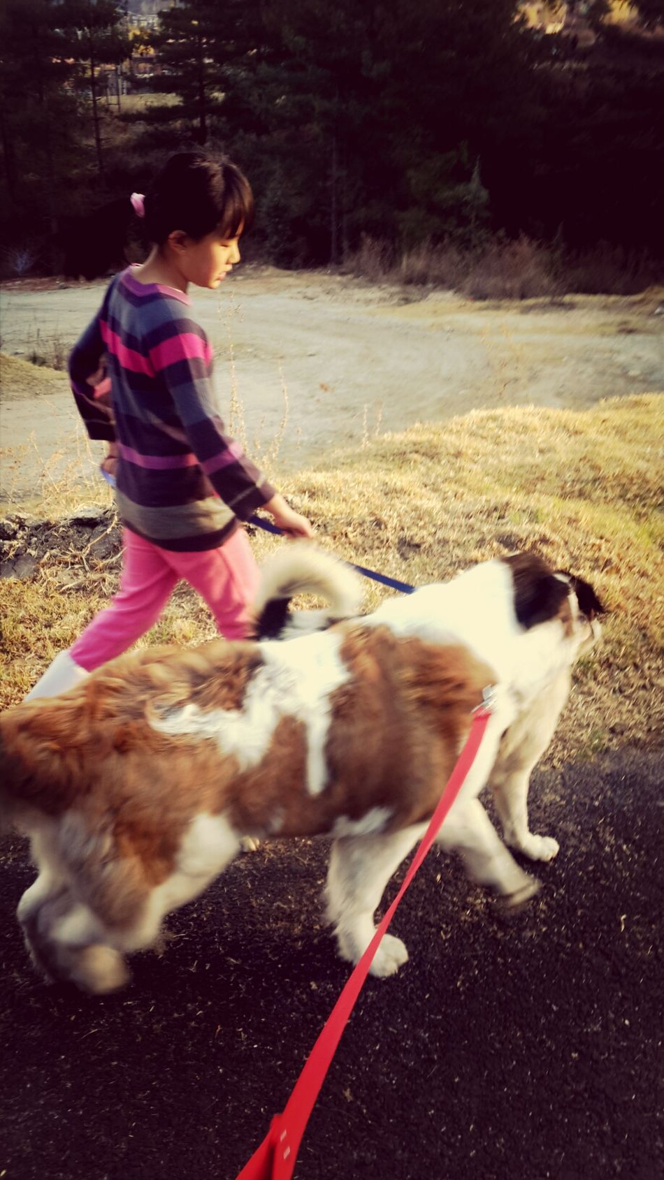 Taking the dogs for a walk...