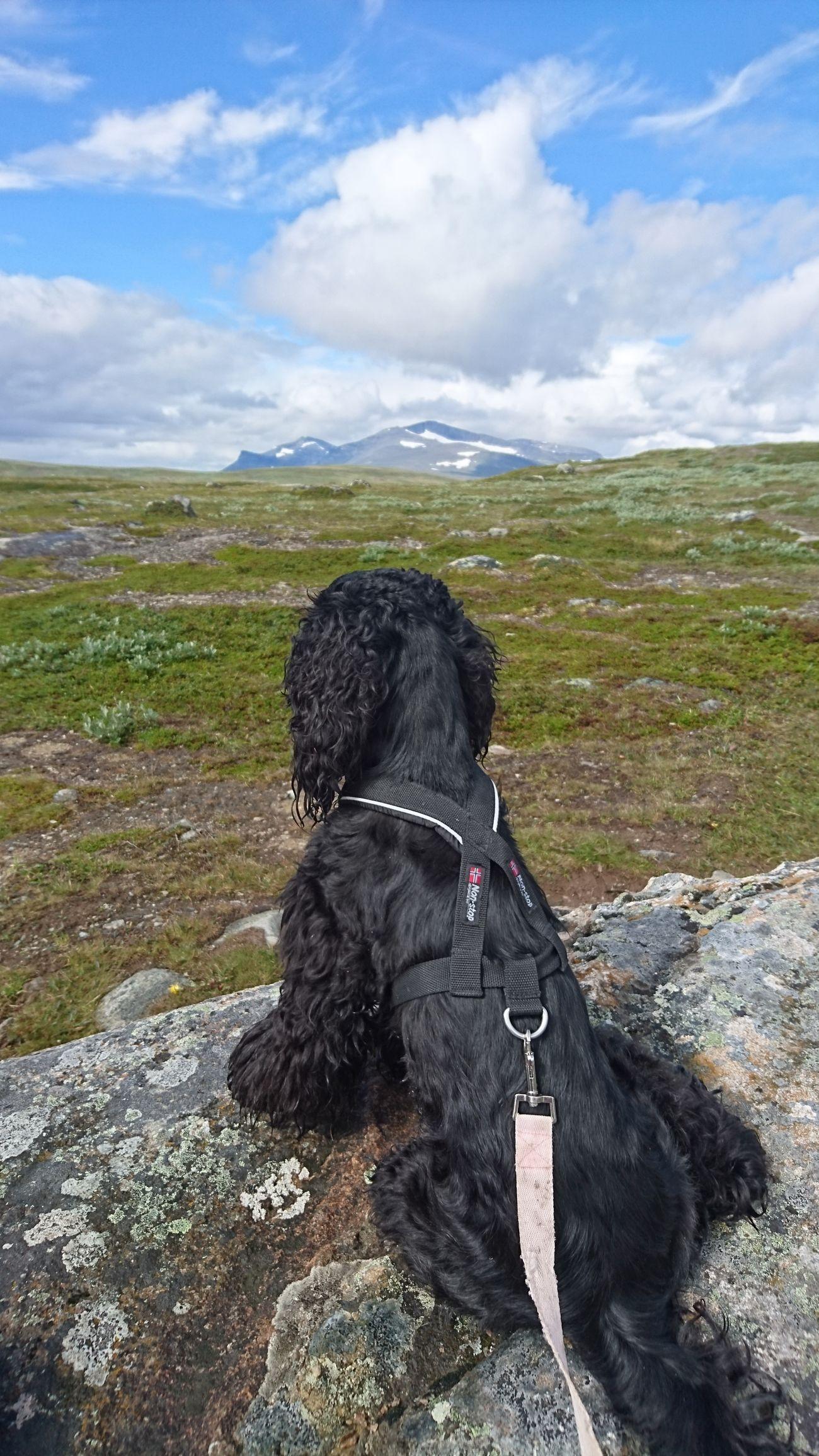 Torkilstöten Helags Mountain Dog Bella Sky And Clouds