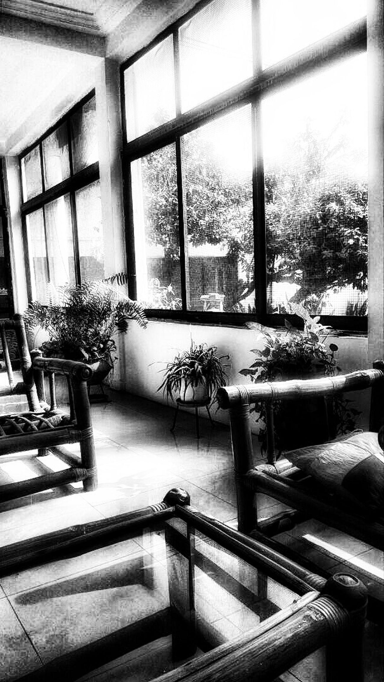 Product Sundays while the sunlight enters from all angles Indoors  No People Day Nature_collection Snapseed Tree Shadows Black And White Photography Black And White Collection  Tina Relaxation Sunlight Enjoying The View