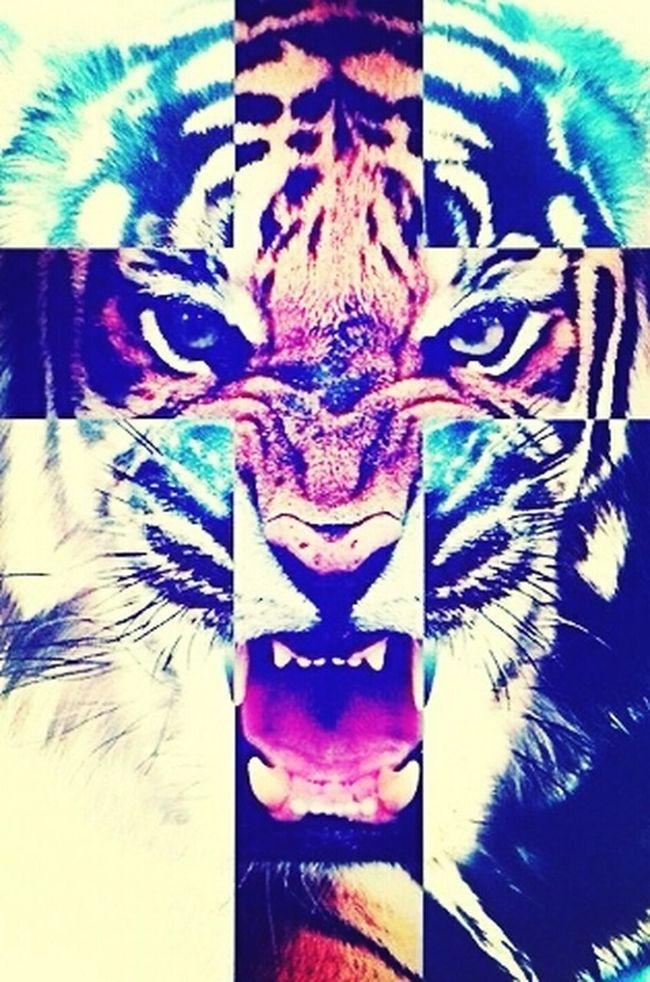 Grr Tigers Micc Animals