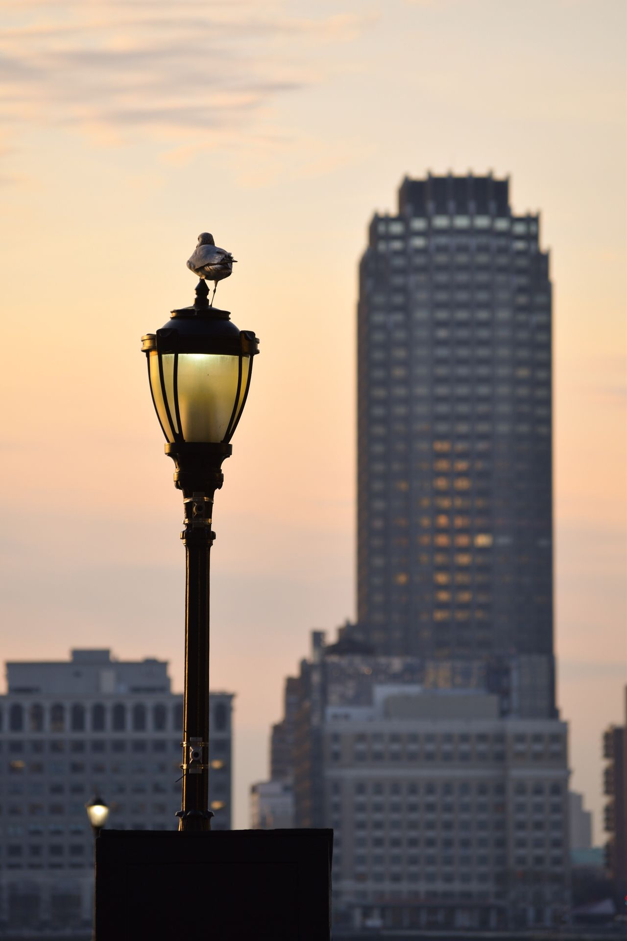 Sunset Sky City Building Exterior Built Structure Street Lamp Cityscape Nature Bird Animal Themes Silhouette Tranquil Scene EyeEmNewHere Tranquility Sunset Silhouettes Sunset_collection Orange Sky Sunset Battery Park Silhouettes Silhouette_collection Beauty In Nature Naturelovers Outdoors Nature Nature_collection