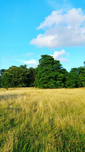 WoodLand Land Lying Fallow Natural Grass Nature Photography Sunny Day Summer2016 Wilderness Area Nature Photograhy Walking In The Woods London Park. Sunnyday Light Clouds