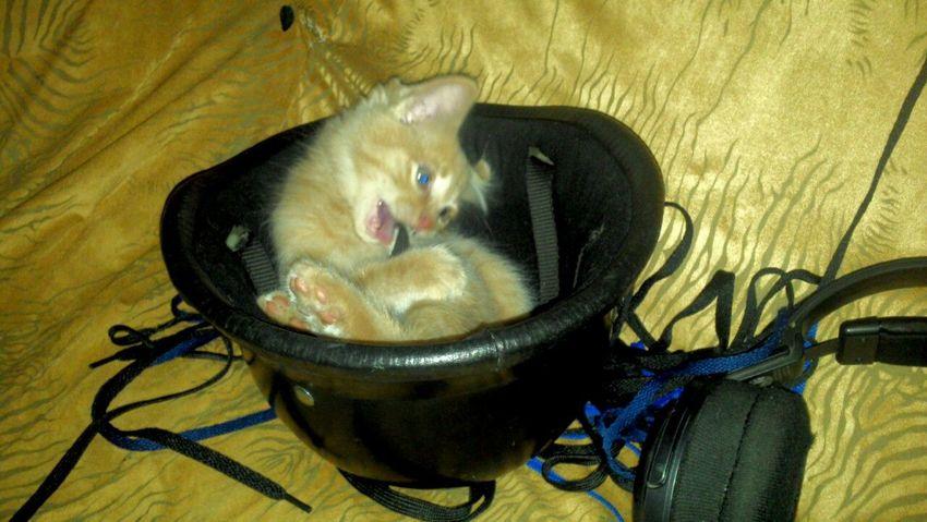 Cat Gato Gatos Gatosfelizes GatosFelices Cats Cat♡ Helmet Playing