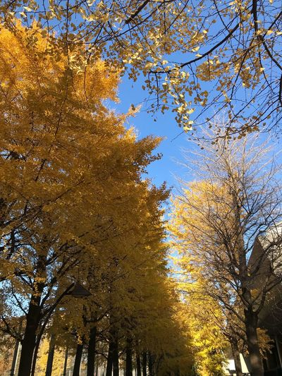 Tree Autumn Low Angle View Branch Nature Leaf Growth Outdoors No People Beauty In Nature Day Change Sunlight Scenics Sky