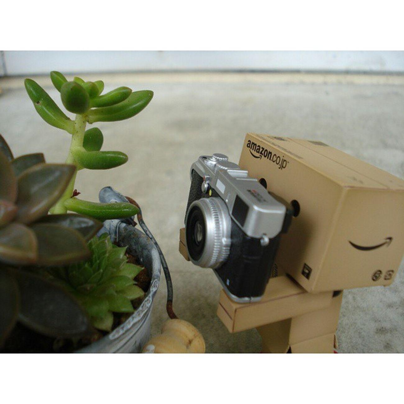ダンボー FUJIFILMミニチュアカメラコレクション ミニチュアカメラコレクション 別のカメラで撮影中のダンボー