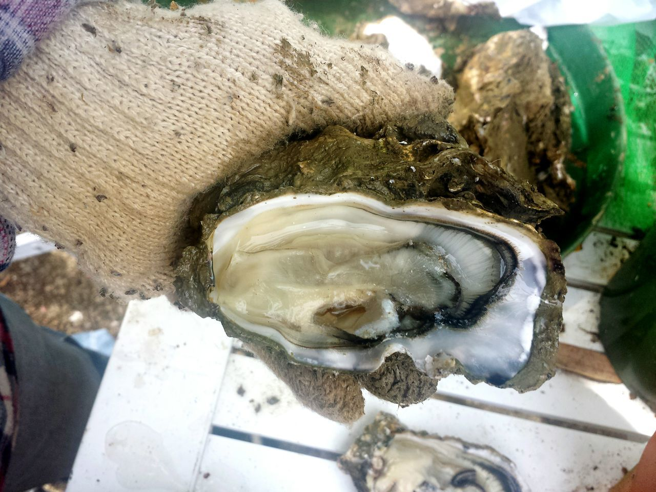 SHELLFISH  Organic Food Bowl Oyster Time Seafood Lovers Seagood Shell Seafood Oyster  Fresh Luxurylifestyle  Luxurious Food And Drink No People