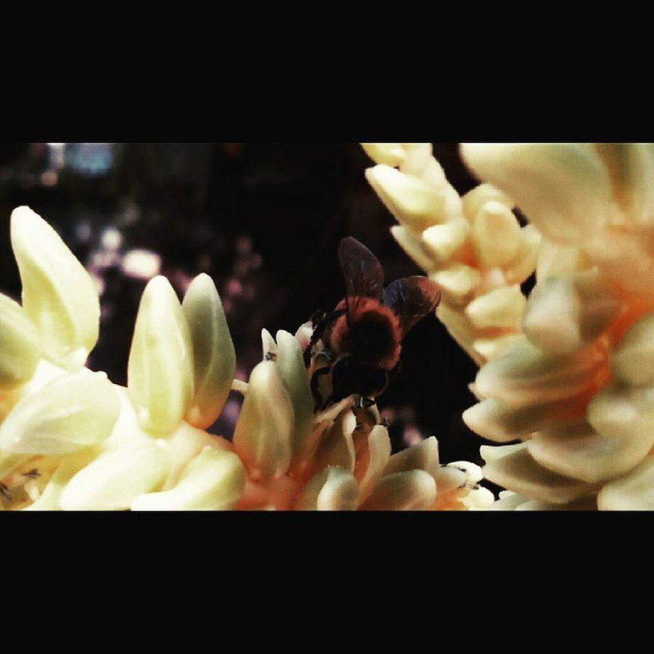 Aveja Macro FotoDeayer Enfoque Coco Insecto Miel Followme Instalike Instamoment DíaSoleado M Follwme Siguemeytesigo Gracias Por Sus Likes