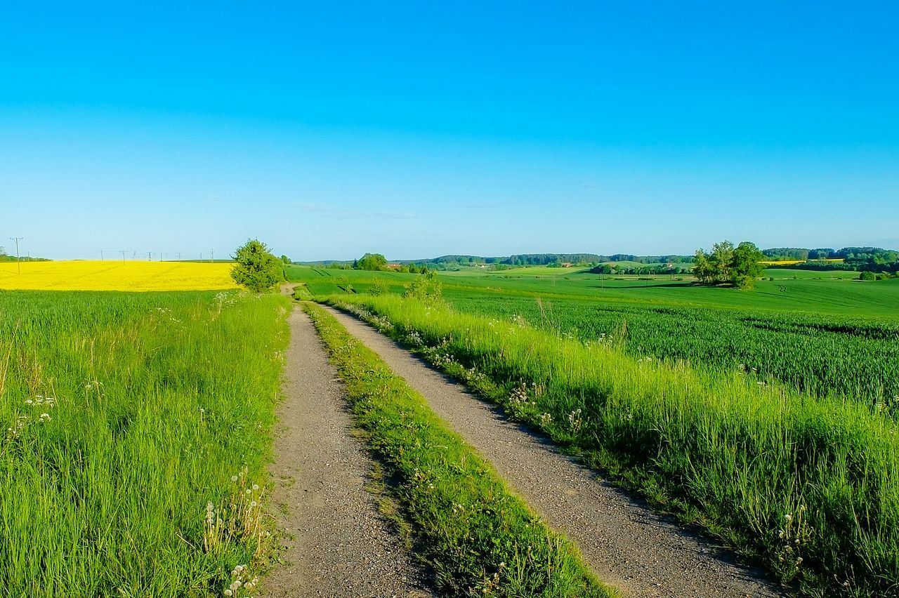 Agriculture Rural Scene Farm Field Crop  Green Color Landscape Nature Sky Beauty In Nature Growth Scenics Outdoors No People Day Freshness Tree Clear Sky Road Warmia Poland Polska