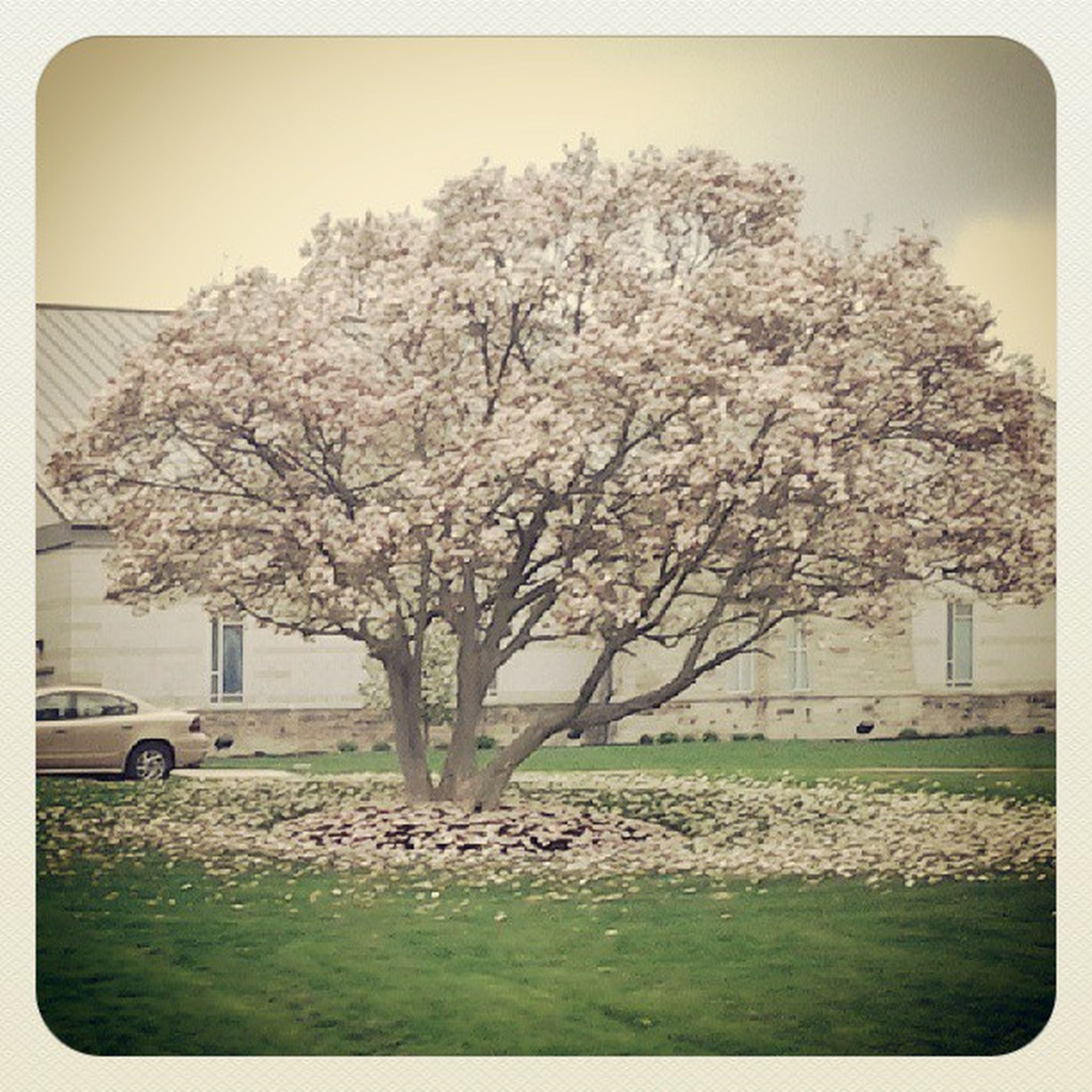 tree, transfer print, auto post production filter, branch, building exterior, built structure, growth, grass, architecture, bare tree, field, nature, flower, sky, park - man made space, clear sky, beauty in nature, lawn, day, tranquility