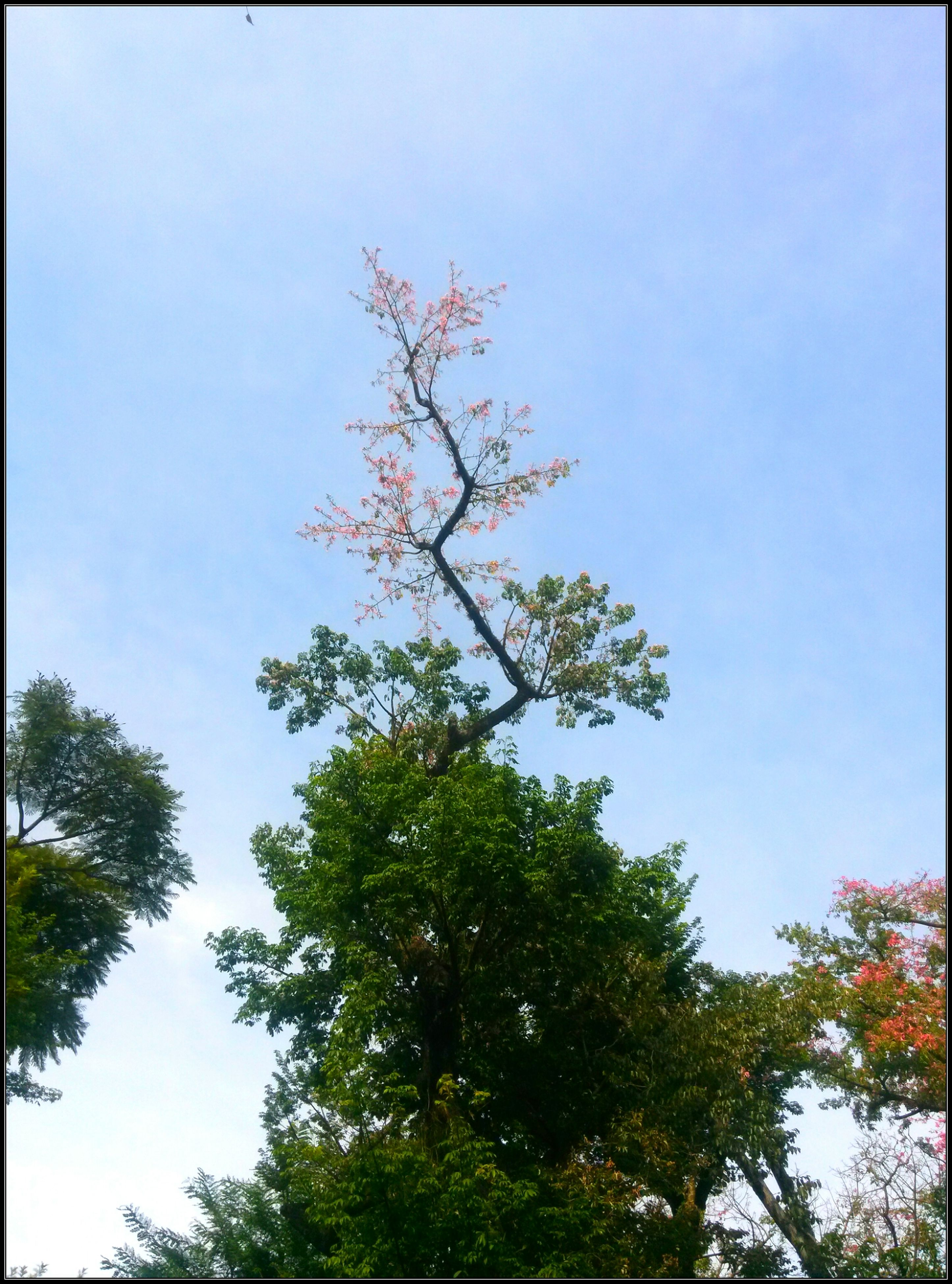 tree, growth, low angle view, nature, branch, day, beauty in nature, sky, no people, outdoors, tranquility, flower, fragility, freshness, close-up