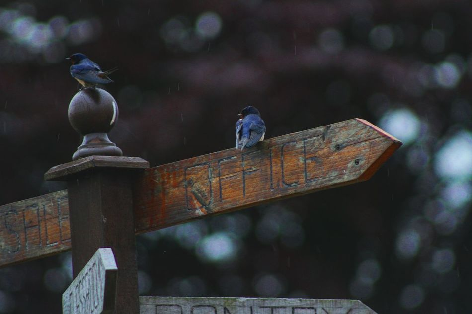 lost birdss Animal Themes Animals In The Wild Bird Bird Photography Birds In A Tree Birds In The Wild Birds🐦⛅ Day Focus On Foreground Ledge Monument Outdoors Perching Railing Selective Focus Tranquility Two Is Better Than One Water Weathered Wildlife First Eyeem Photo