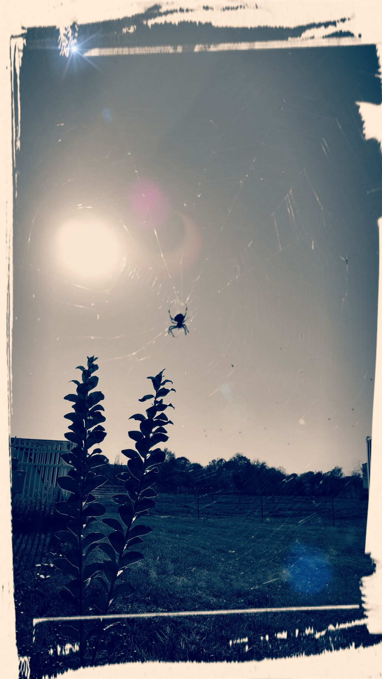 Spidersweb Spiders Nest Spiders Outdoors No People Nature Tree Star - Space Sky Astronomy Day