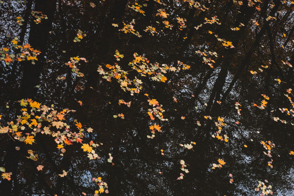 Autumn Autumn Colors Beauty In Nature Leaves Nature Outdoors Reflection Sweden Water