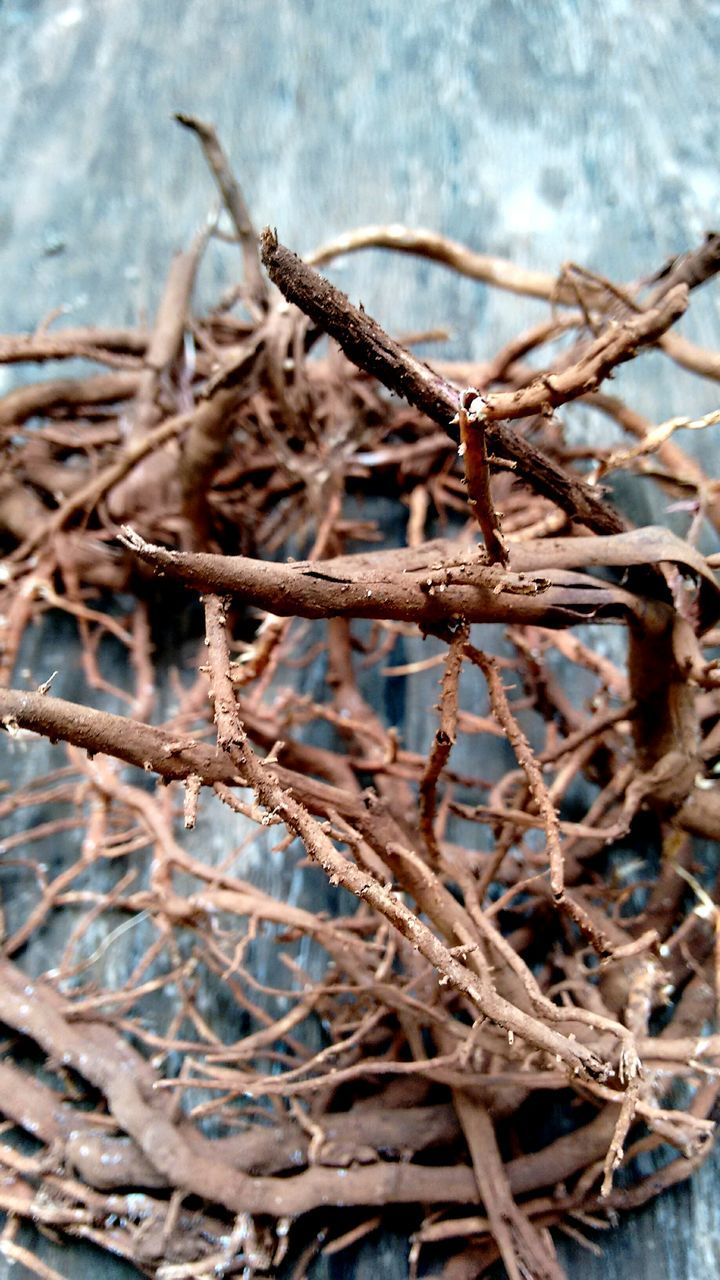 dry, twig, no people, day, dried plant, nature, outdoors, close-up
