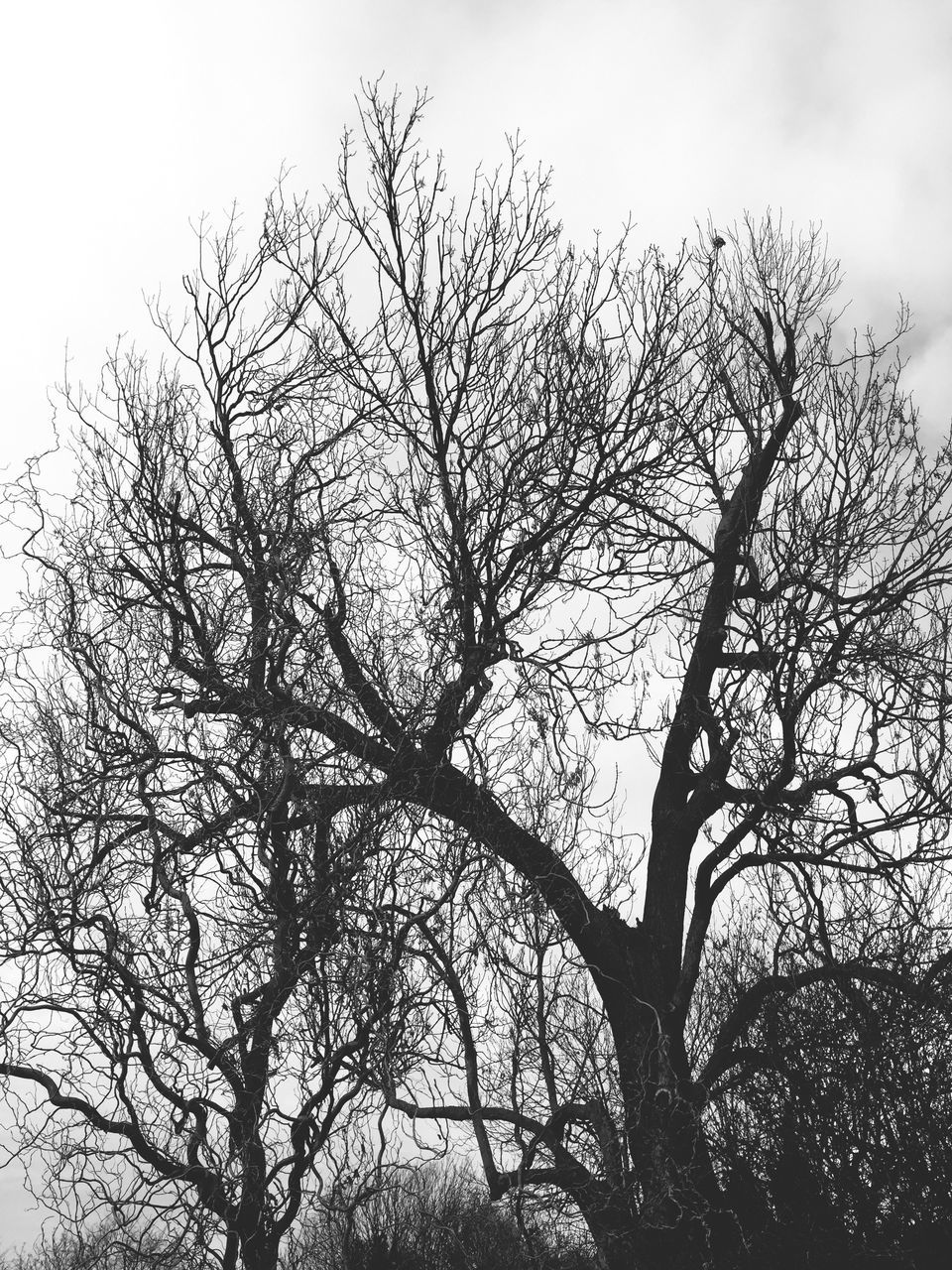 bare tree, tree, branch, nature, beauty in nature, tranquility, low angle view, sky, outdoors, scenics, no people, lone, day, tree trunk