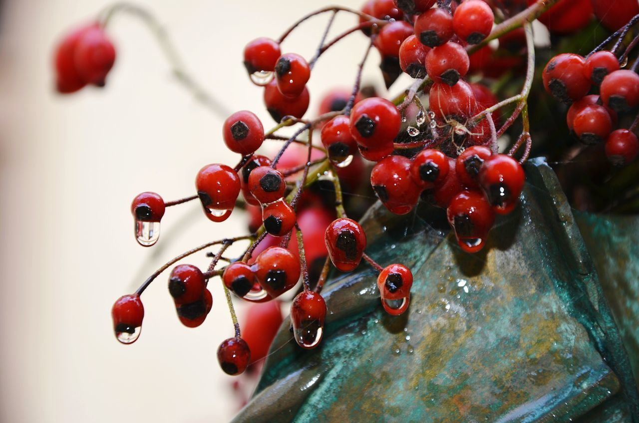 fruit, red, berry fruit, close-up, food and drink, no people, rowanberry, healthy eating, food, day, outdoors, freshness, water, growth, nature, tree