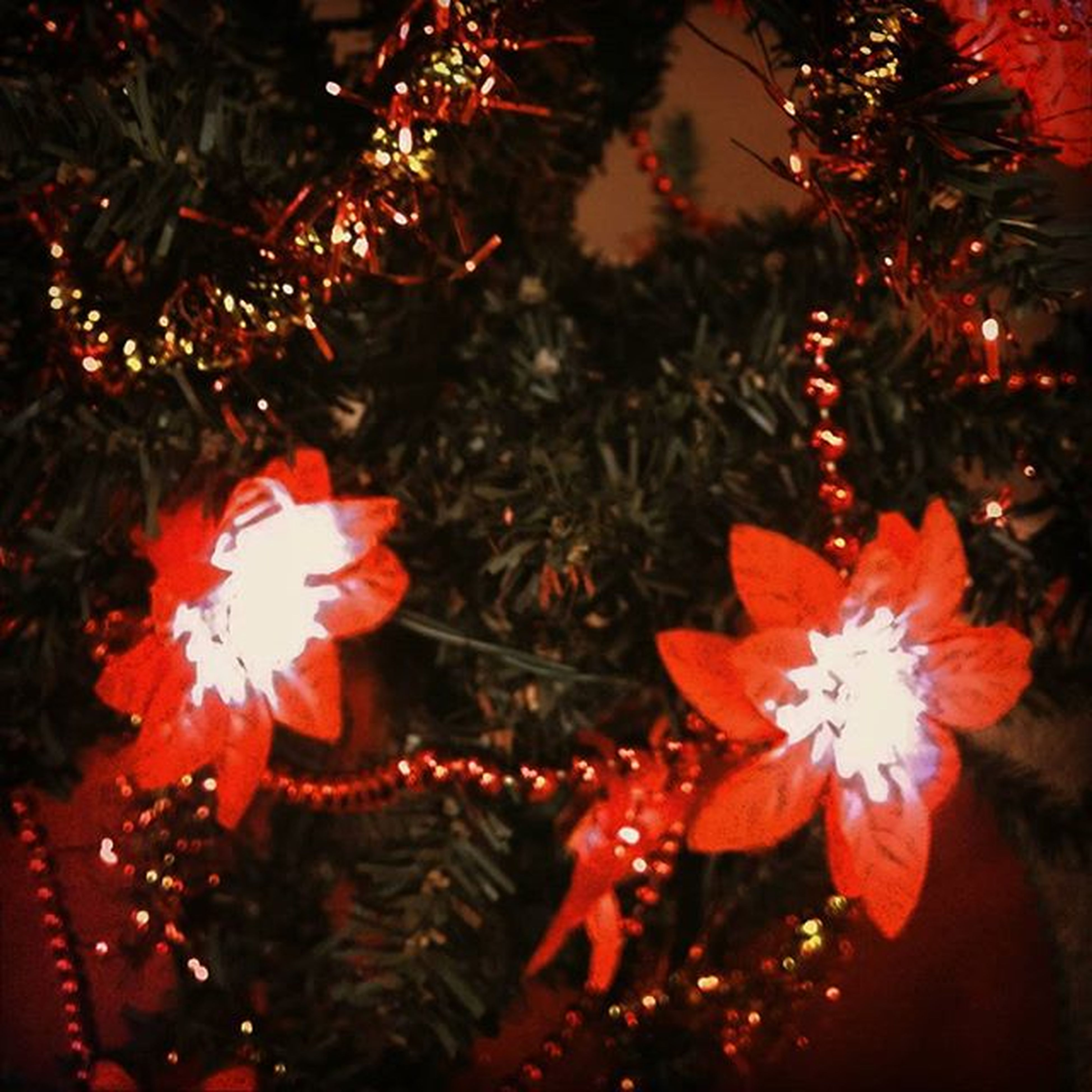 illuminated, night, red, celebration, flower, growth, decoration, glowing, tradition, close-up, tree, nature, outdoors, no people, christmas tree, christmas, petal, christmas decoration, beauty in nature, focus on foreground