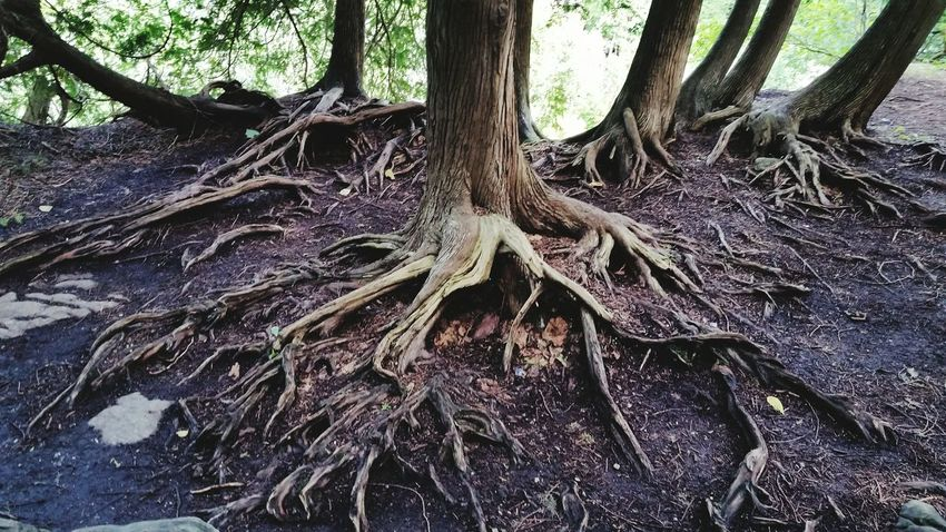 beginning of life Tree Root Nature Forest Roots Of Life Roots Of Tree