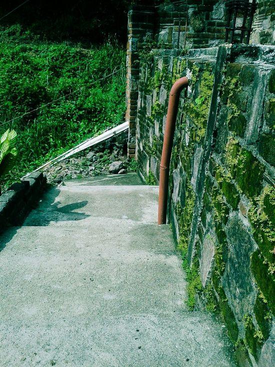 La ultima Super Fresh Escaleras Musgo Green Power Puerto Vallarta Urban Nature Plantitas