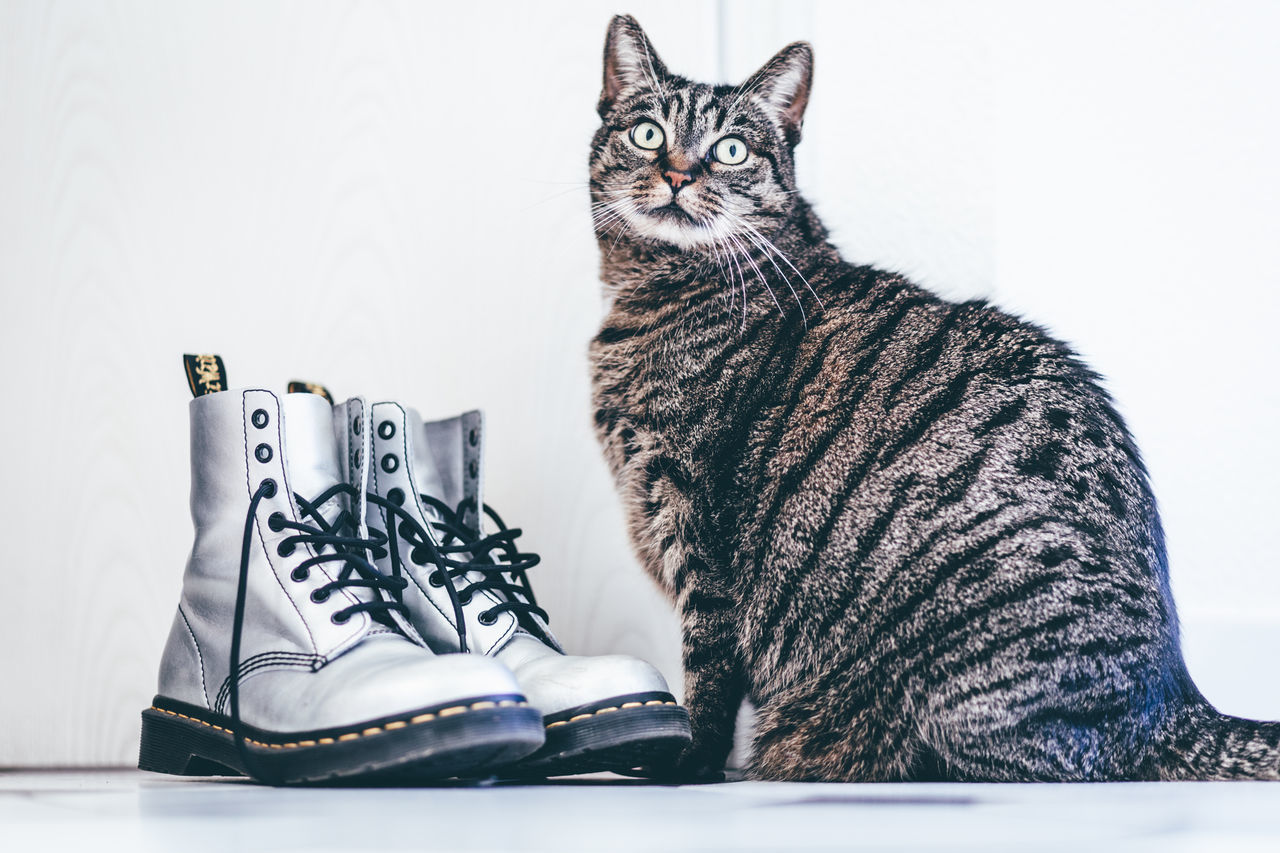 Animal Themes Cat With Shoes Catlover Cats Der Gestiefelte Kater Doc Martens Doc Martens Boots Domestic Animals Domestic Cat Dr Martens Dr Martens Boots No People One Animal Pets Shoelovers Shoes Shoes And Cat Shoes With A Cat Shoeshop Shoeshopping Shoestore Silver Dr Martens Silver Shoes Sitting Tabby Cat
