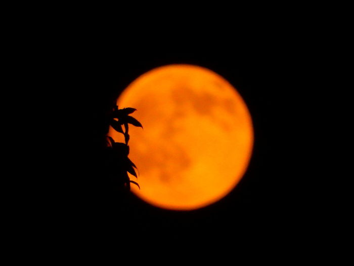 Beauty In Nature Black Color Buck Moon Full Moon Gorgeous Night Idyllic Illuminated JustJennifer@TruthIsBeauty No People Orange Color Outdoors Sky Tranquility TruthIsBeauty Photographic Art