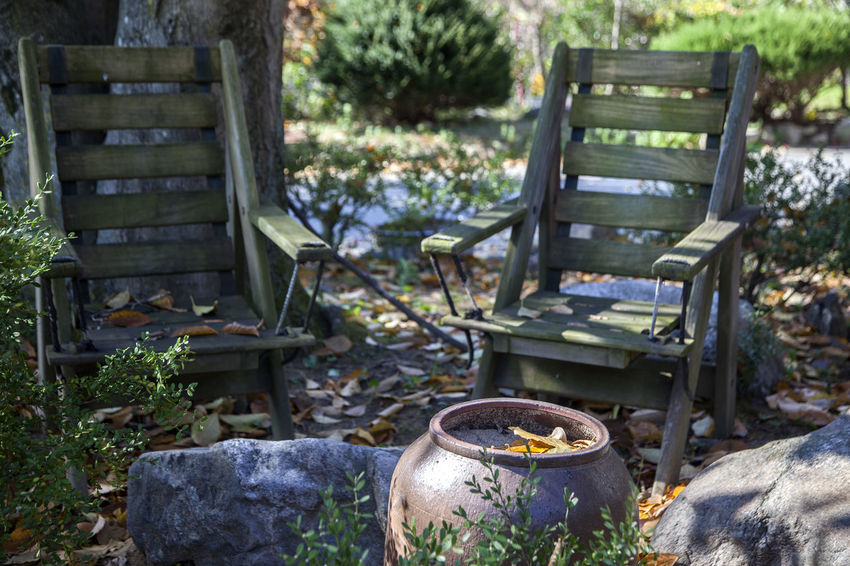 Autumn Autumn Collection Bench Chair Close-up Day Fall Freshness Heat - Temperature Nature No People Outdoors