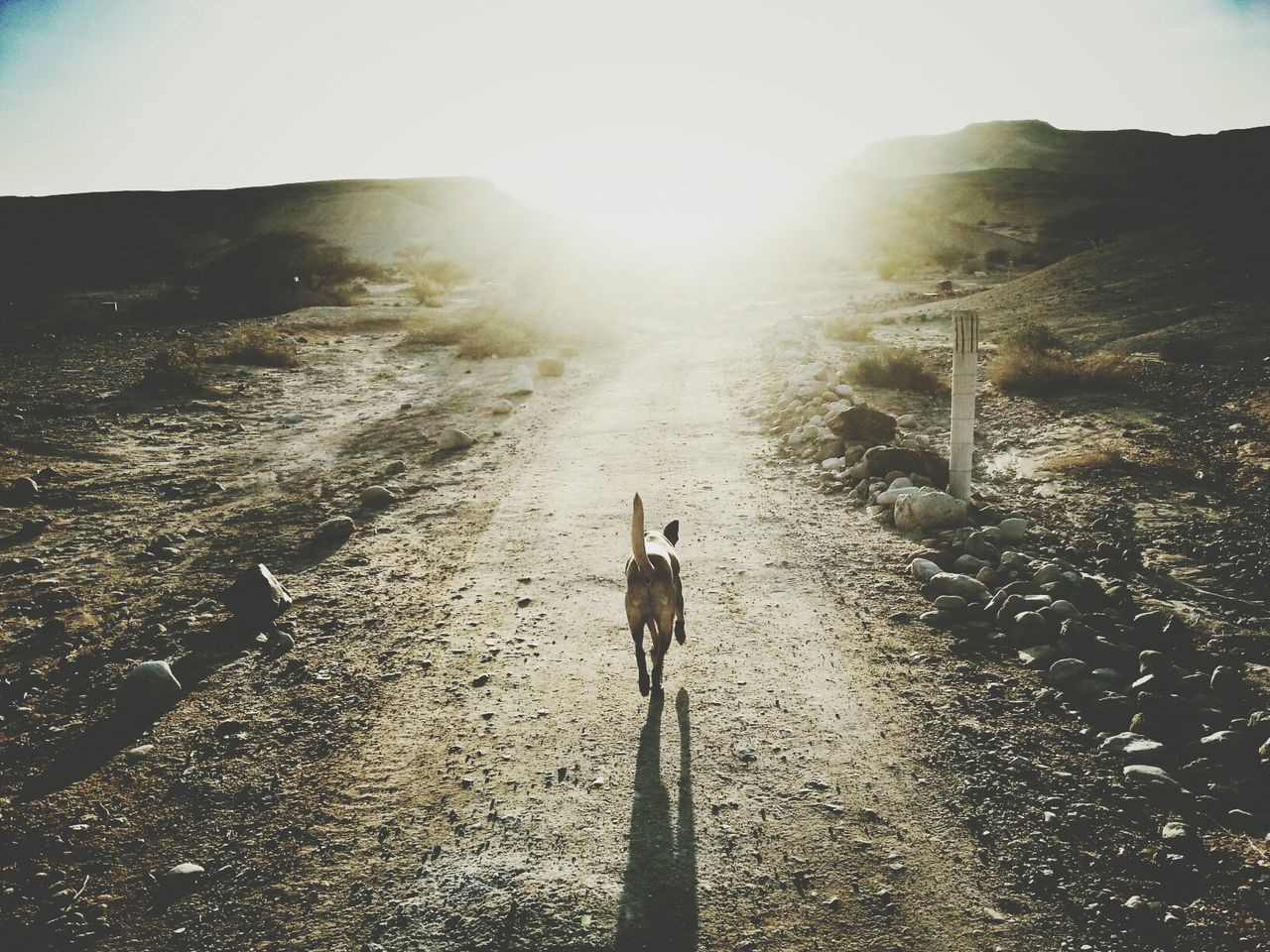 Beautiful stock photos of road, Animal Themes, Day, Dirt Road, Dog