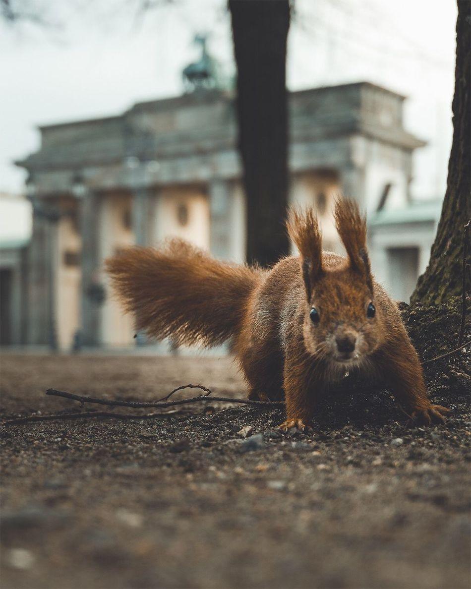 Beautiful stock photos of wildlife,   Berlin,  Alertness,  Animal Themes,  Animal Wildlife