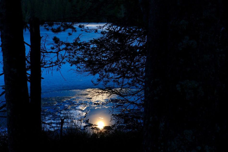 Nature Dark Forest Tranquility Beauty In Nature moonlight