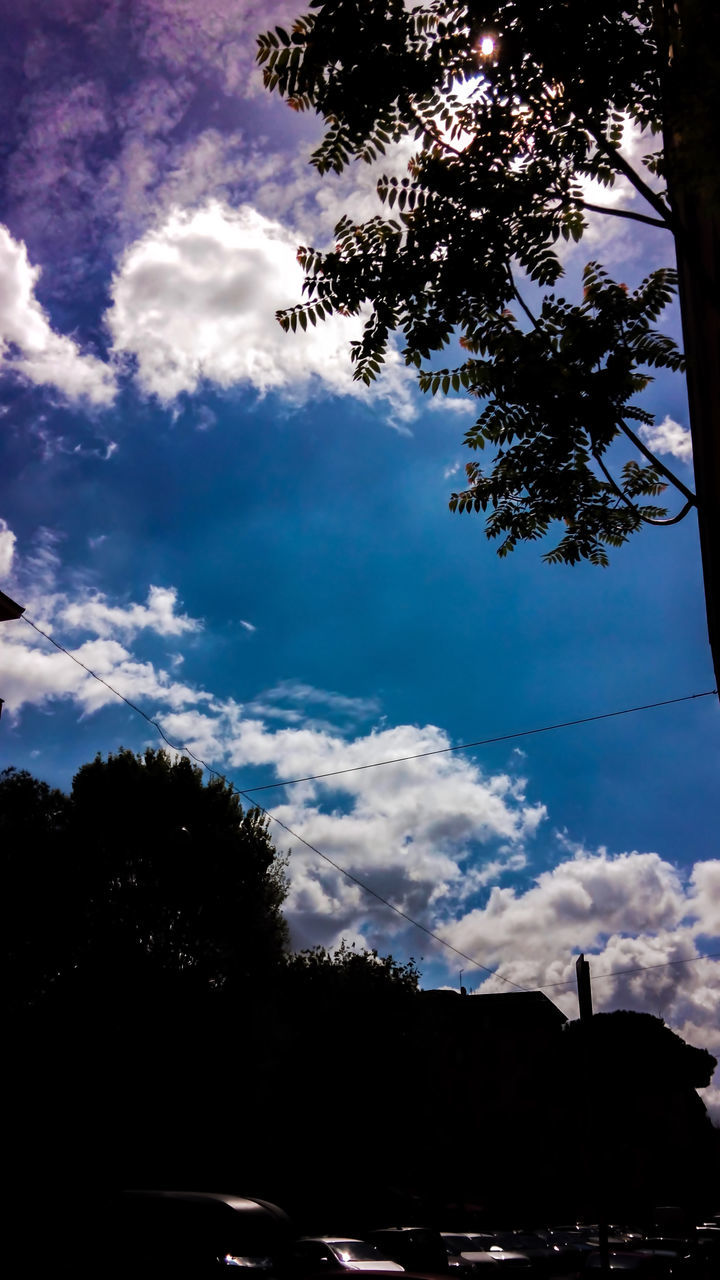tree, sky, silhouette, cloud - sky, no people, low angle view, nature, beauty in nature, outdoors, growth, day
