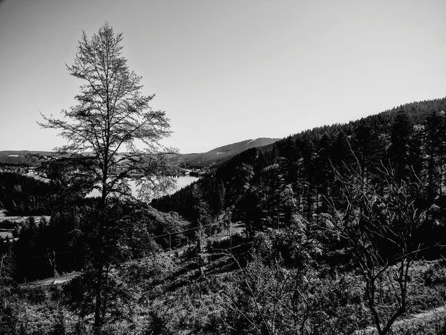 Deutschland Germany Schwarzwald Travelphotography Baden-Württemberg  Hochschwarzwald Nature Photography Black And White Landscape Black Forest Nopeople No People Outdoor Photography Travel Photography Photography Titisee Woods Relaxing Water Travel See Sea And Sky Blackandwhite Blackforest